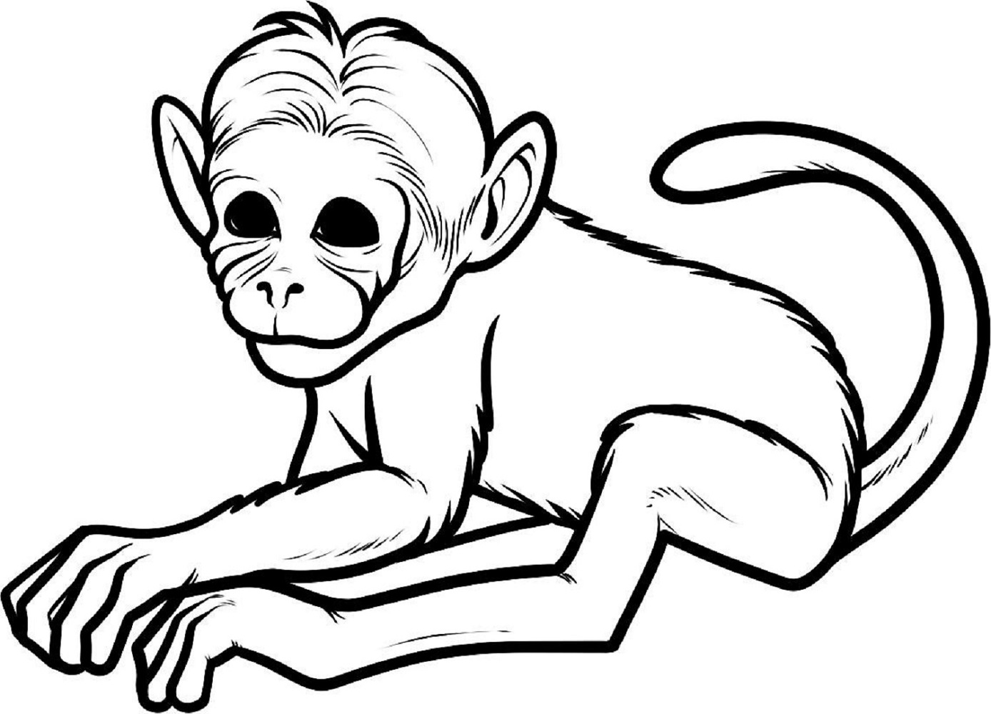 images of monkeys for school