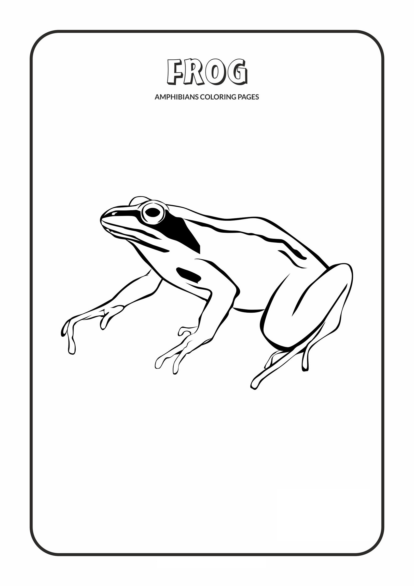 Amphibian and Reptile Coloring Pages | 2300x1626