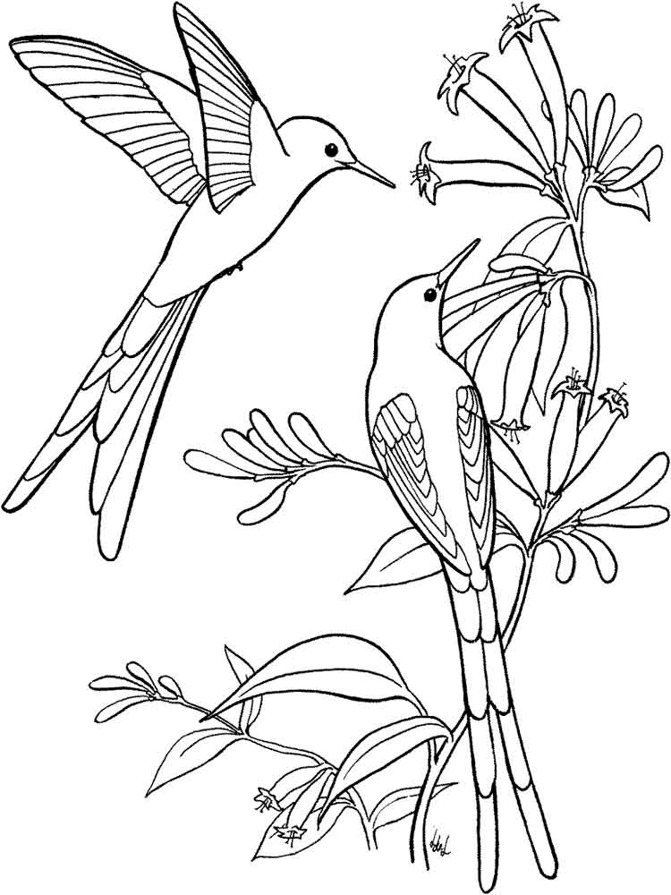 cute hummingbirds coloring pages