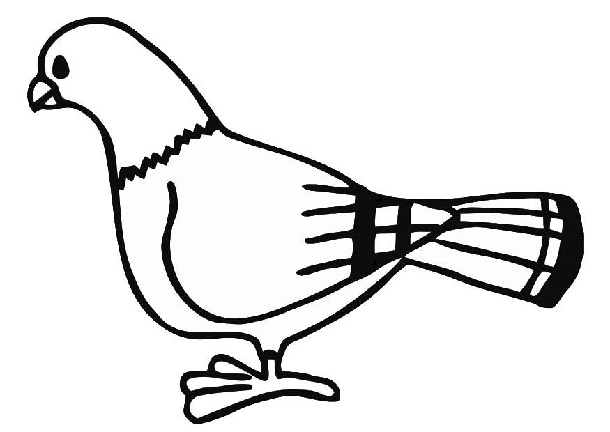 pigeon coloring pages for kids