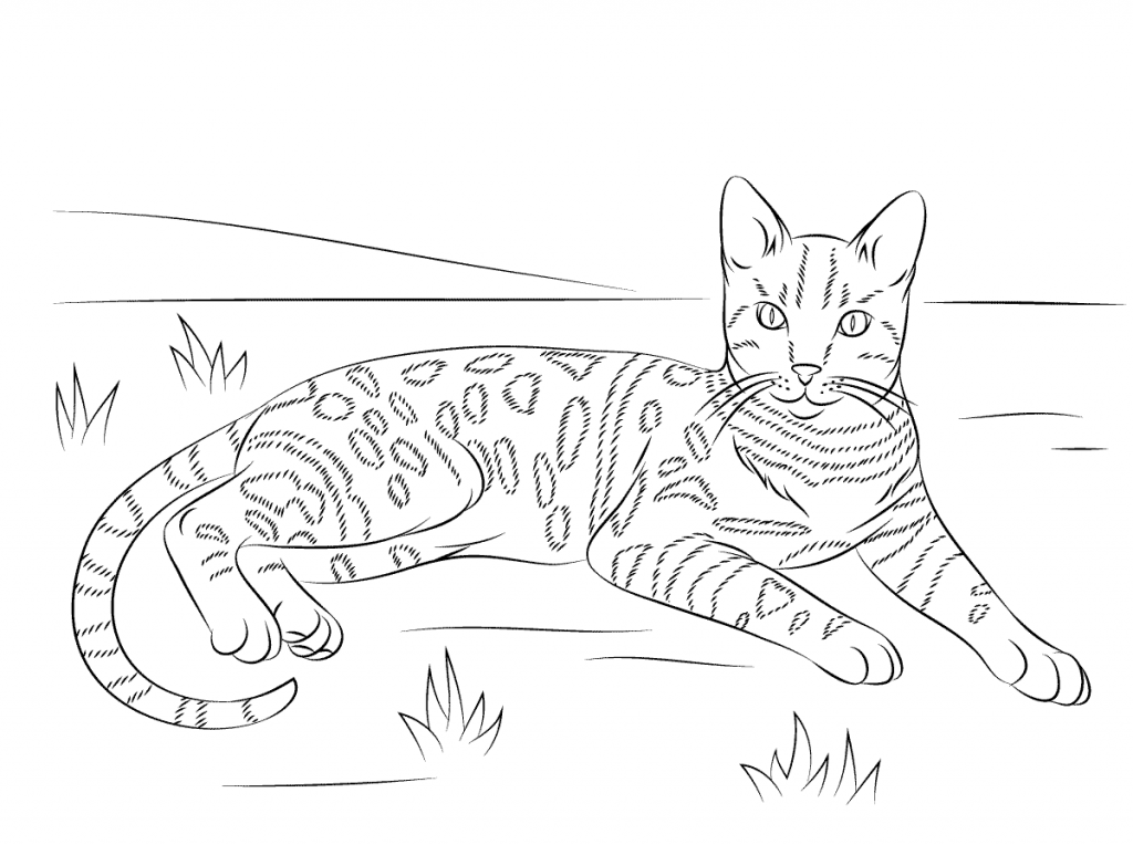 easy realistic cat coloring pages