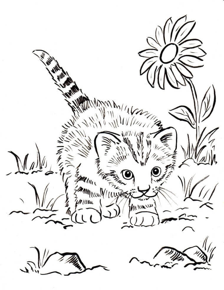 realistic cat coloring pages for kids