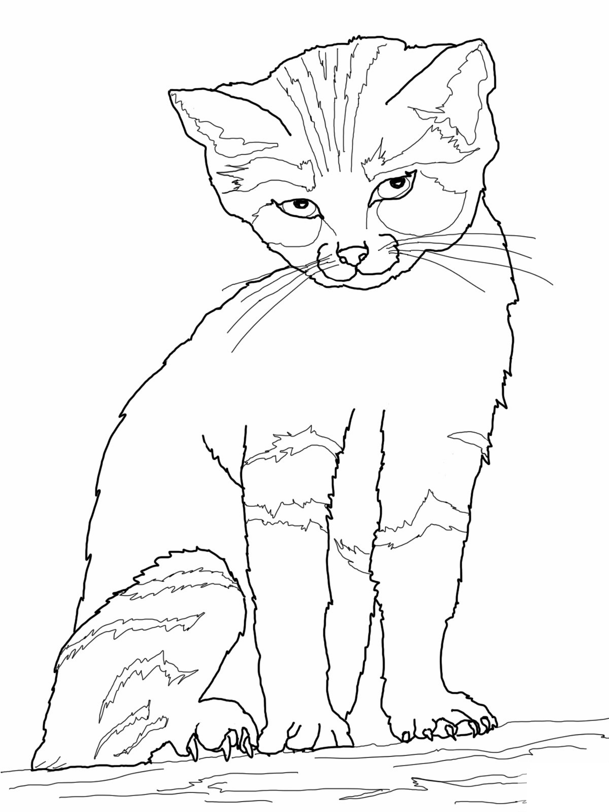realistic cat coloring pages for kindergarten
