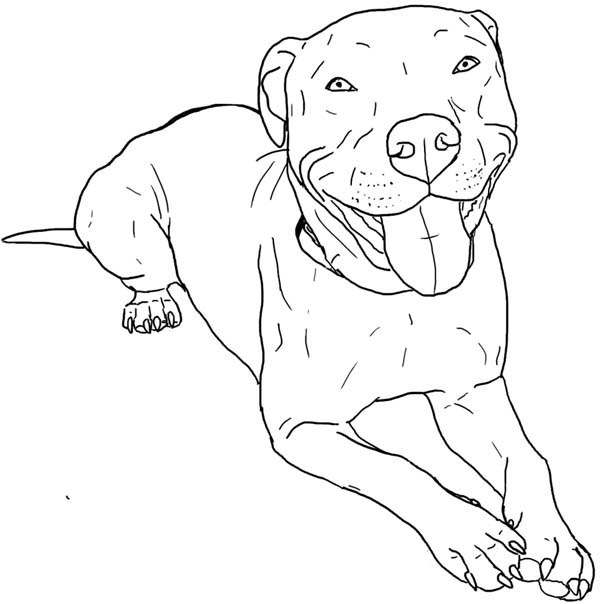pitbull realistic dog coloring pages
