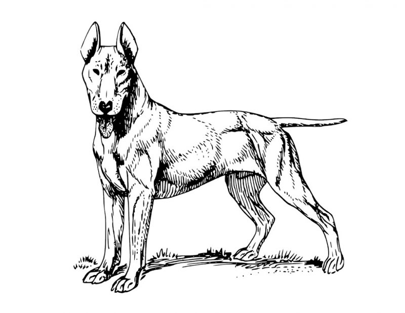 realistic dog coloring pages for education