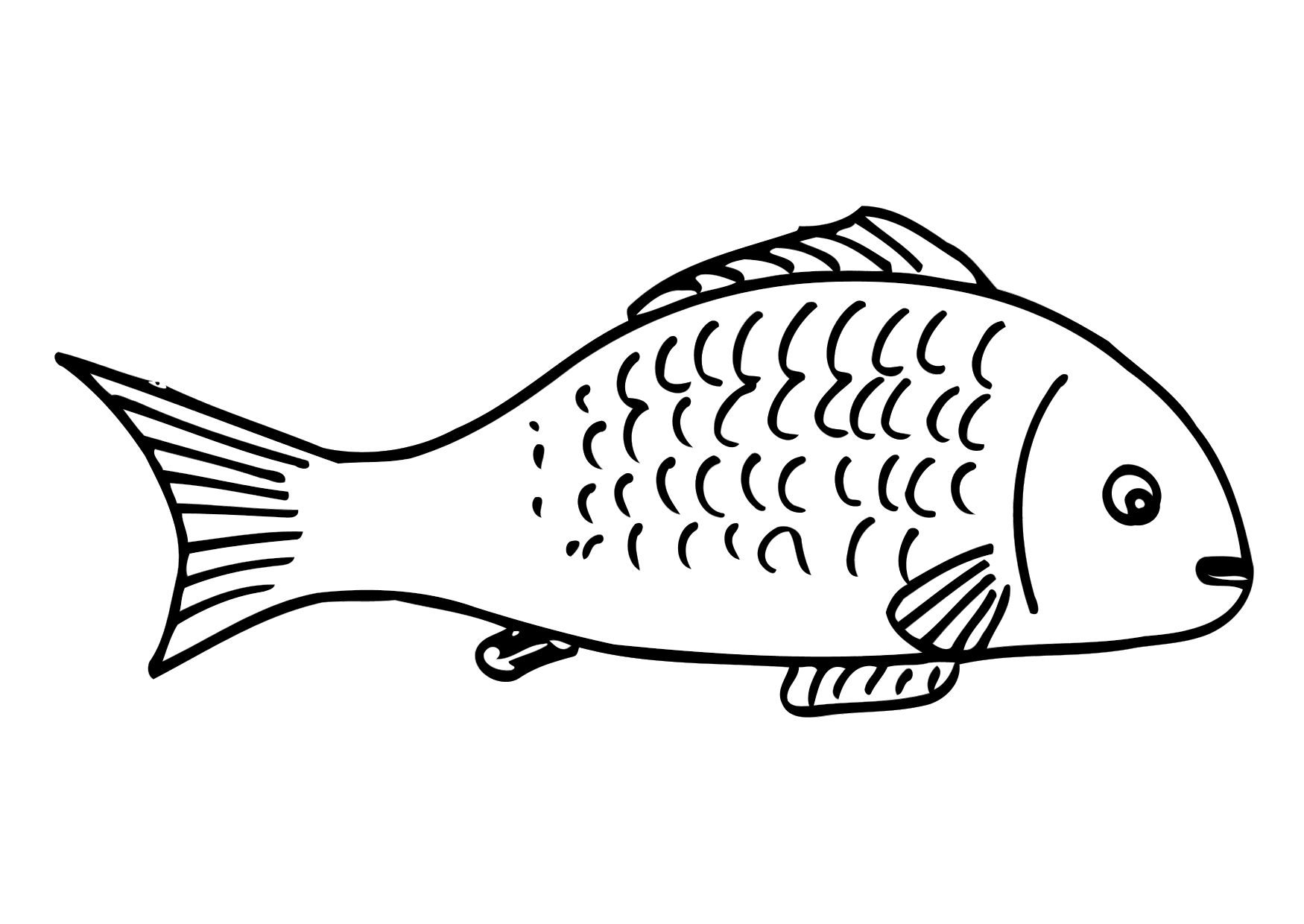 fish coloring pages worksheet